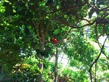 Tropisk trädgård Arkivbilder