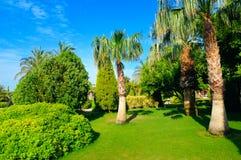 Tropisk trädgård med palmträd och gröna gräsmattor royaltyfri foto
