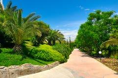 Tropisk trädgård med palmträd och gröna gräsmattor royaltyfri bild