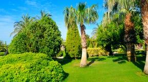 Tropisk trädgård med palmträd och gröna gräsmattor Brett foto royaltyfria bilder