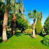 Tropisk trädgård med palmträd och gröna gräsmattor arkivbilder