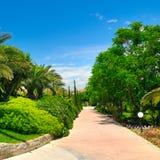 Tropisk trädgård med palmträd och gröna gräsmattor fotografering för bildbyråer
