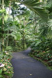 tropisk trädgårds- bana Arkivbilder