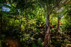 Tropisk trädgårds- drivhushjärtförmakinre Royaltyfri Fotografi