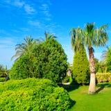 Tropisk tr?dg?rd med palmtr?d och gr?na gr?smattor fotografering för bildbyråer