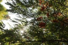 tropisk tree fotografering för bildbyråer