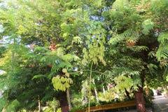 tropisk tree royaltyfria foton