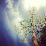 tropisk tree Arkivfoton