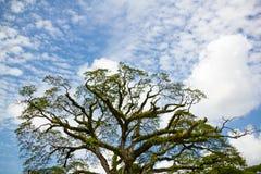 tropisk tree Royaltyfri Bild