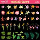 Tropisk uppsättning för blommadesignbeståndsdelar royaltyfri illustrationer