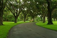 tropisk väg Arkivfoton