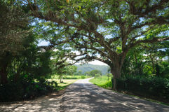 tropisk väg Royaltyfri Bild