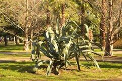 tropisk växt stock illustrationer