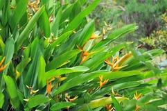 tropisk växt Arkivfoton