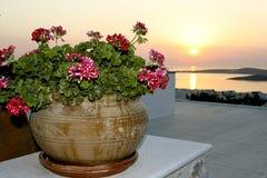tropisk växtsolnedgång Royaltyfria Bilder