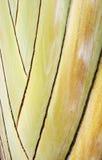 tropisk växtstem Arkivfoton