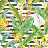 Tropisk vattenfärgmodell royaltyfri illustrationer