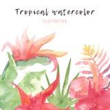 Tropisk vattenfärgnanner med ljusa sidor och blommor Sommargarnering för hälsningkort, exotisk illustration Royaltyfria Bilder