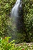 tropisk vattenfall Royaltyfria Foton