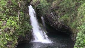 Tropisk vattenfall på ön av Maui stock video