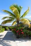 tropisk vegetation Fotografering för Bildbyråer