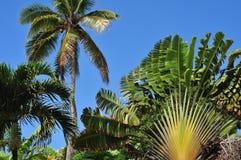 tropisk vegetation Royaltyfri Fotografi