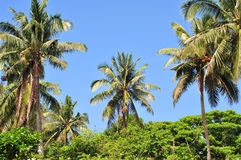 tropisk vegetation Royaltyfri Foto
