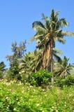 tropisk vegetation Arkivbilder