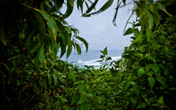 Tropisk vegetation och havet royaltyfri fotografi