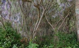 Tropisk vegetation och träd och buskar av den Hawaii trädgården av Maui av Hawaii, USA Arkivfoton