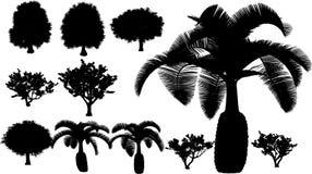 tropisk vektor för tree vektor illustrationer