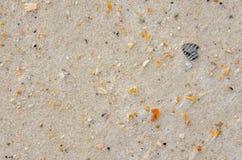 Tropisk vit sand med bitar av brutna skal Fotografering för Bildbyråer
