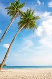 Tropisk vit sand med palmträd Arkivfoto
