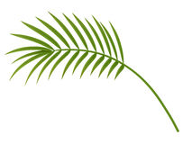 tropisk växt Arkivfoto