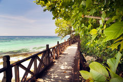 tropisk walkway Arkivfoton
