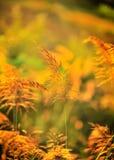 tropisk yellow för blomma Royaltyfria Foton