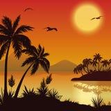 Tropiska öar, gömma i handflatan, blommor och fåglar royaltyfri illustrationer