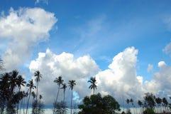 tropiska blåa skies royaltyfri bild