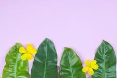 Tropiska blad- och gulingblommor för Philodendron Arkivfoto