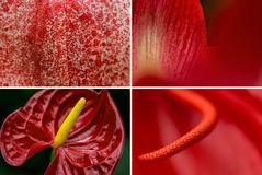 Tropiska blommabakgrunder Royaltyfri Bild
