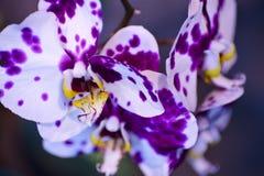 Tropiska blommor Arkivbilder