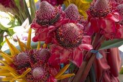 Tropiska blommor Royaltyfri Bild