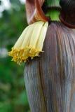 Tropiska blommor Arkivfoto
