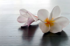 Tropiska blommor för för CloseupPlumeria eller Frangipani på wood tabell, s Royaltyfri Foto