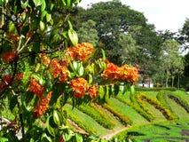Tropiska blommor i parkera Arkivbilder