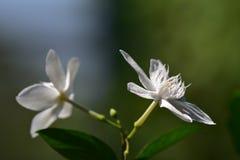 Tropiska blommor i trädgården Arkivfoton