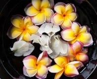 Tropiska blommor i vatten i svart vas Royaltyfri Fotografi