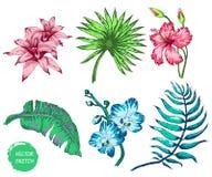 tropiska blommor och gömma i handflatan Arkivbilder