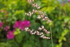 Tropiska blommor och gräs Royaltyfria Foton