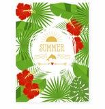 Tropiska blommor och sidor - hibiskus, palmträd, Monstera, plumeria Royaltyfri Bild